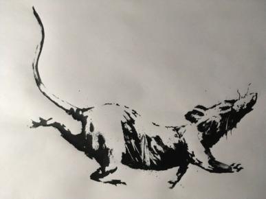 Rat - Croydon 1