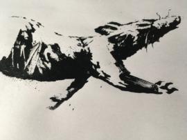Rat - Croydon 4