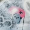 Ted Patrick - Pink Gorilla b